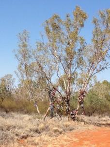 Boulia Bike tree