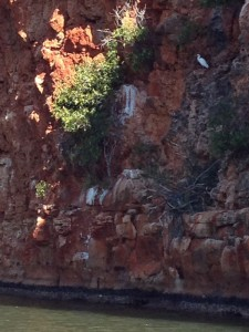 Heron Yardie Creek 1765