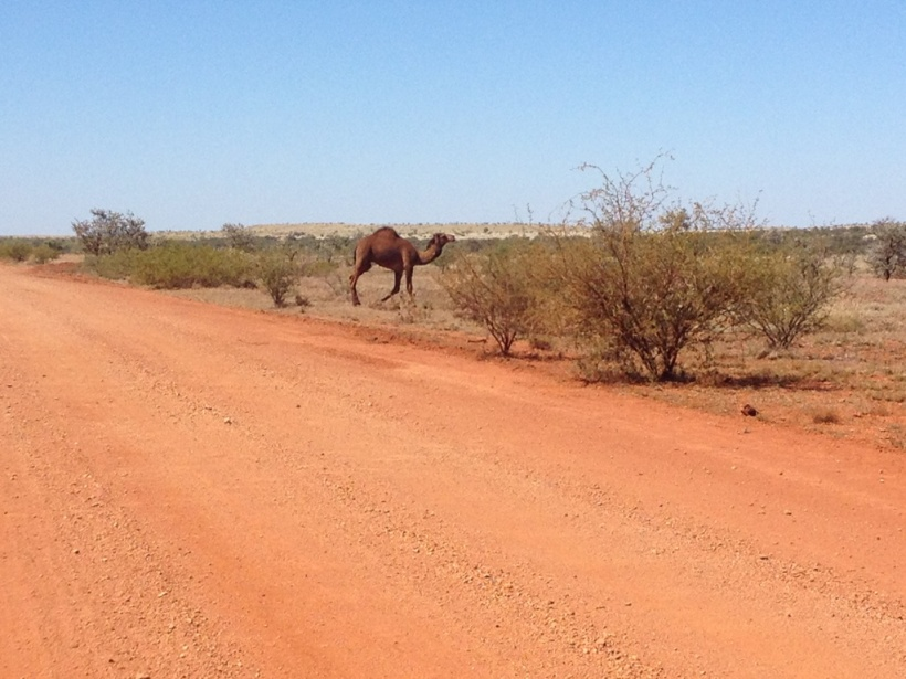 Red Dust - and local wildlife