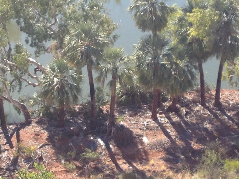 Millstream Palms at Deep Reach