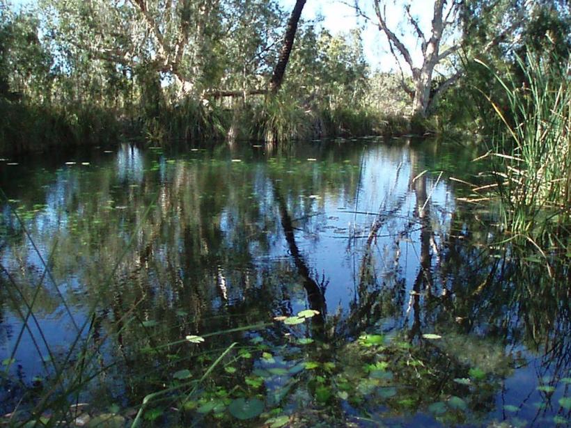 Millstream Lily Pond
