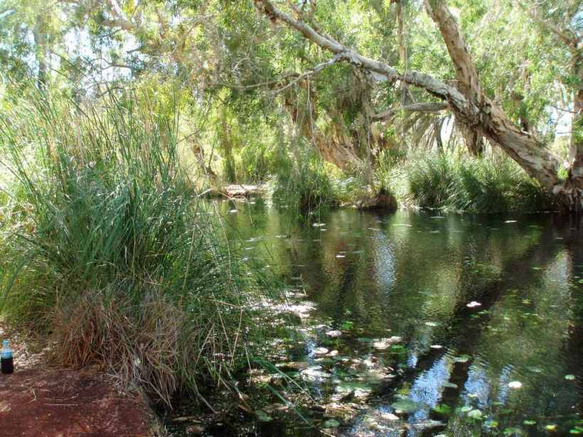 Millstream Lily Pool