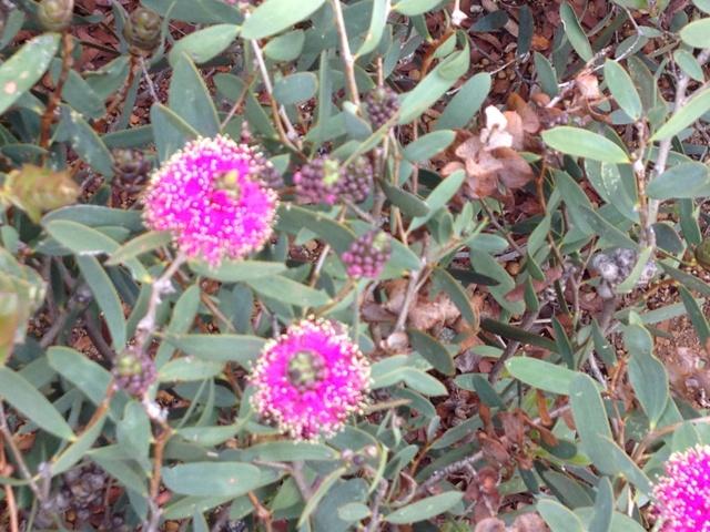 WildflowersIMG_2027