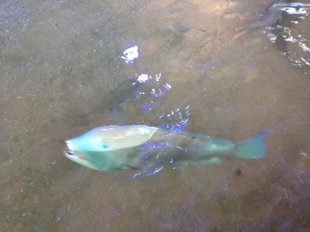 Shark Bay Aquarium