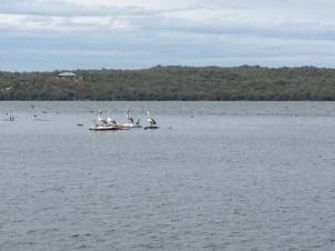 Denmark Boat Cruise