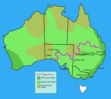 Dingo_fence_in_Australia[5]