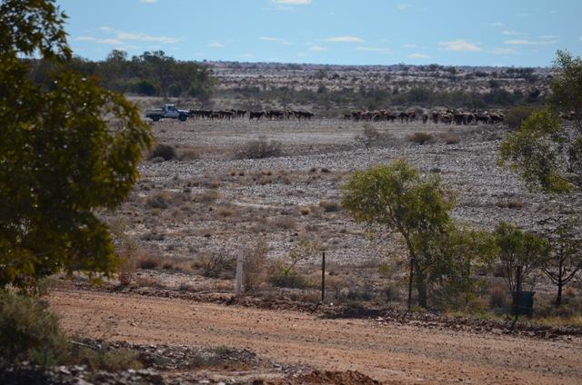 Nilpinna Station South Australia