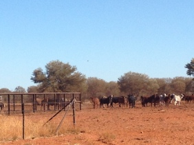 Cattle Station near Alice Springs