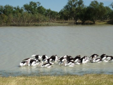 Longreach Waterhole, Northern Territory