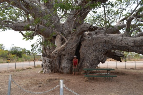 Boab Tree near Derby, WA