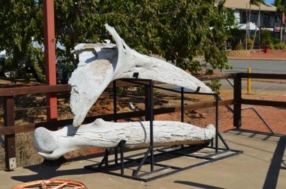 Pearl Luggers, Broome Western Australia