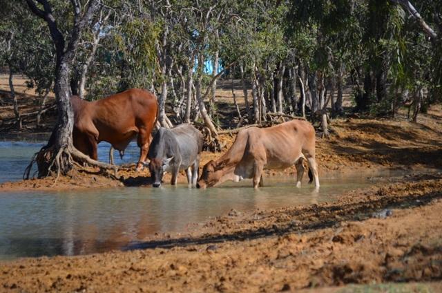Ellendale Lake, Western Australia