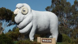 Big Merino Wagin WA