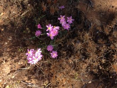 Wildflowers at Canna, Western Australia