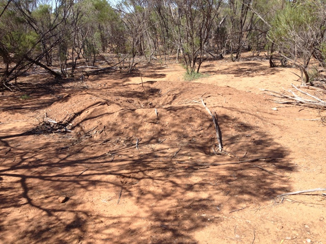 Mallee Fowl nest at Canna, Western Australia