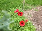 IMG_5584Community garden