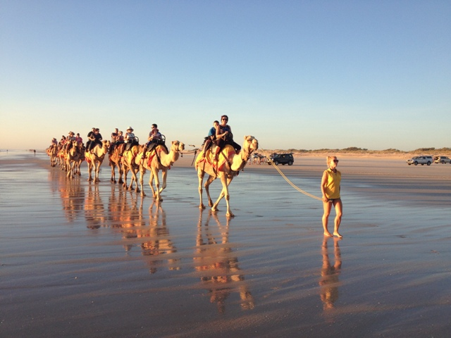 Camels at Cable Beach, Broome