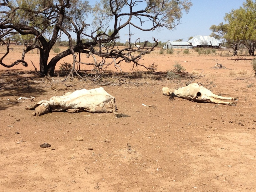 Drought at McKinley, Queensland