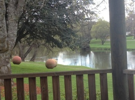 Meander River, Deloraine Tas