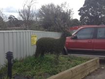 Topiary in Railton, Tasmania