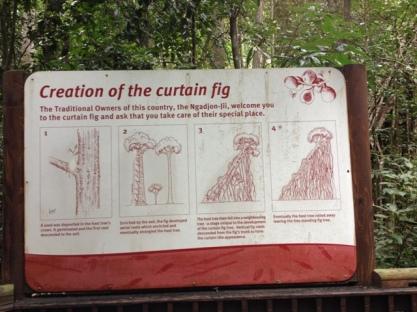 Curtain Fig Tree, Yungaburra, Queensland